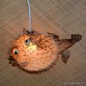 Vintage Style Large Puffer Fish Lamps 1
