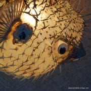 Vintage Style Large Puffer Fish Lamps 9