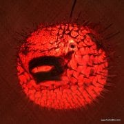 Extra Large Puffer Fish Lamp Red 1