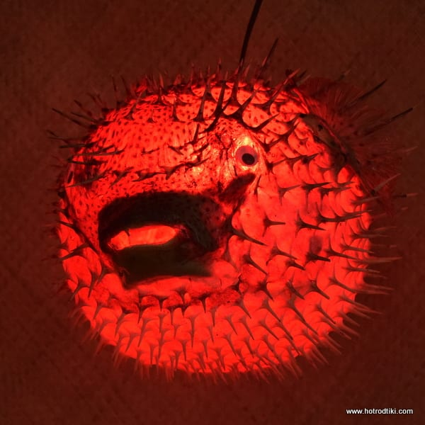 Puffer fish lamp red extra large 18 20 approx for Puffer fish lamp